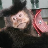 capucijnen_uit_labo1.jpg