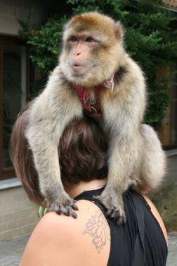 Met een aap aan de deur...