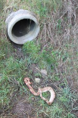 Fietser vindt slang in gracht...