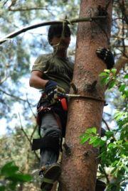 NHC-medewerkers leren boomklimmen...