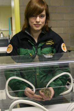 Haasje eerste jong zoogdier van 2010...