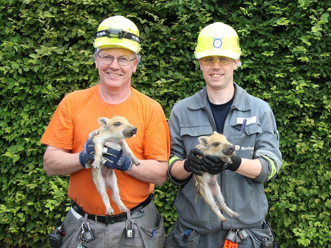 Arbeiders Norbord redden everzwijnbaby