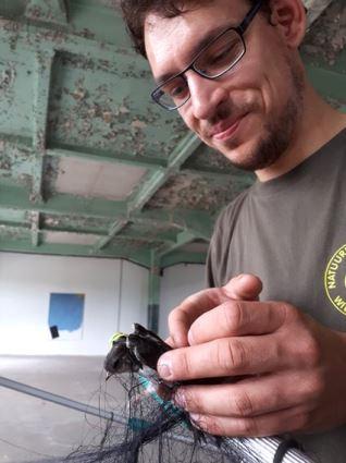 Huiszwaluwen gered uit oververhitte expositieruimte.