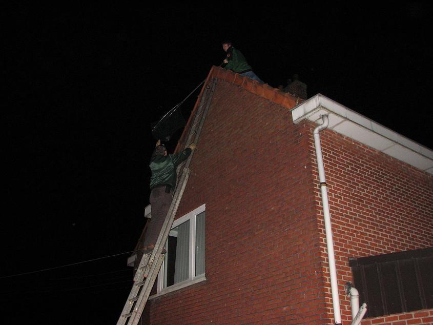 Kauw vastgeraakt tussen dakpannen...