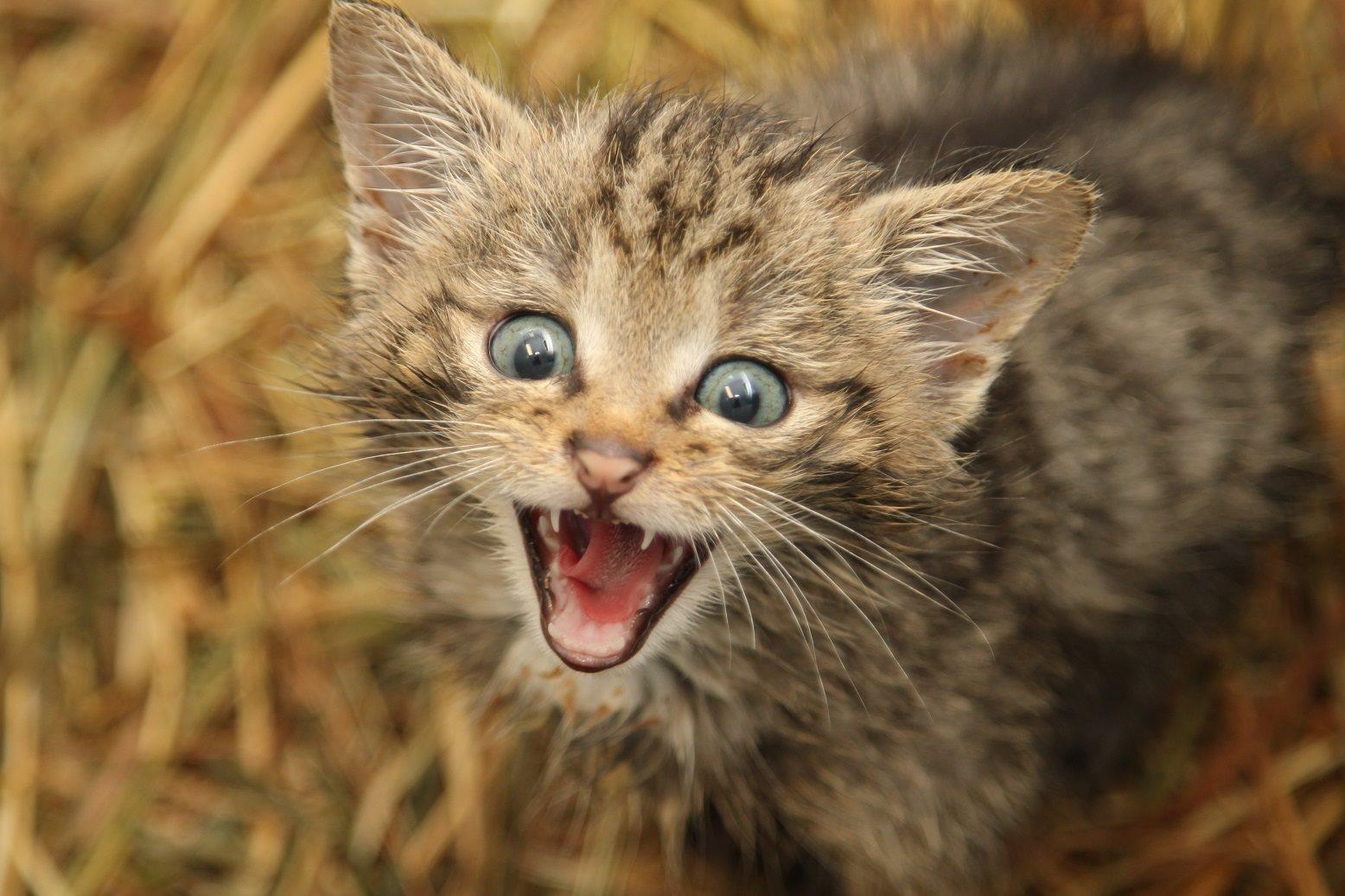 Wilde kat in Natuurhulpcentrum!