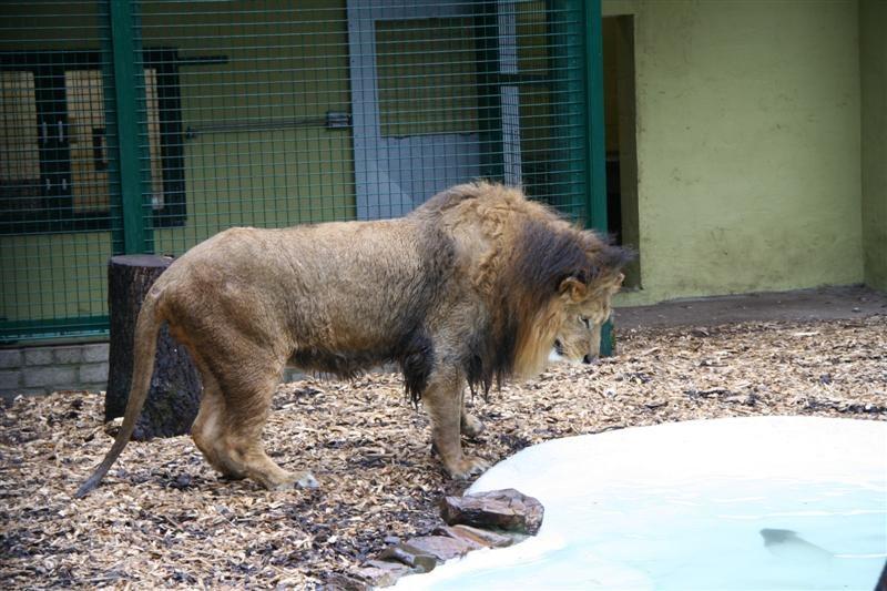Natuurhulpcentrum vangt opnieuw 2 Bocholtse apen...