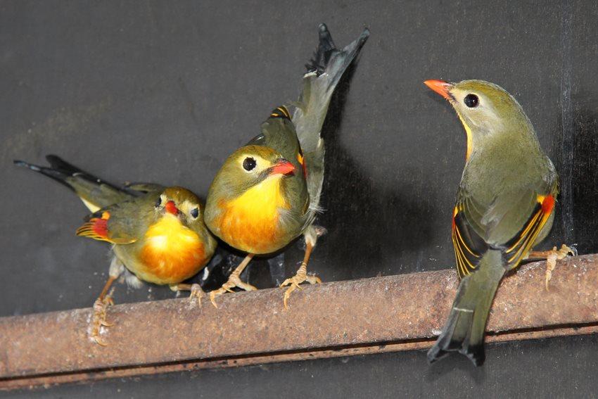 223 exotische dieren vinden nieuwe thuis
