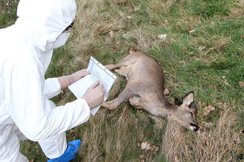 Passieve bewaking wildedierenziekten...