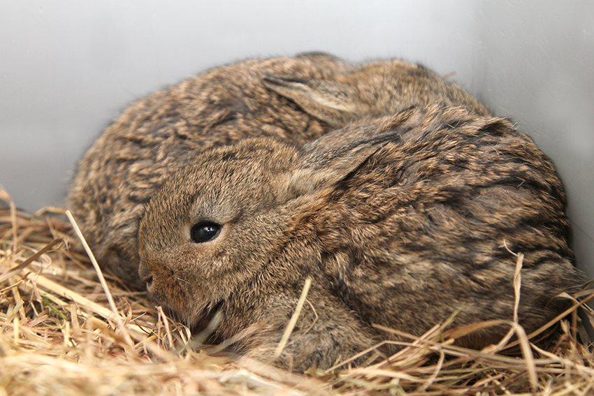 Jonge konijnen uitgeregend...