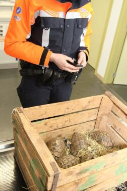 9 landschildpadden in beslag genomen...