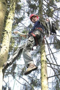 Reiger gered uit boom...