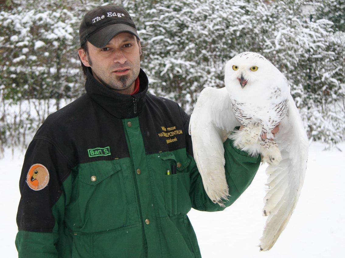 Sneeuwuil gevangen...
