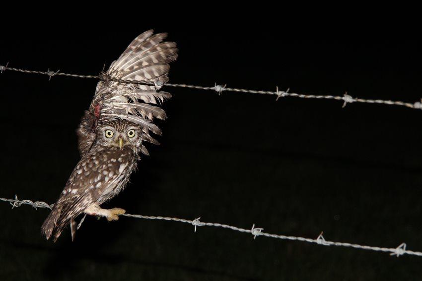 Weer beschermde vogel geschoten in Zuid-Limburg...