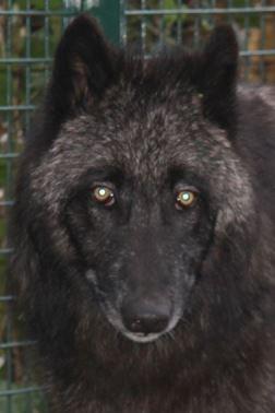 Bezoek de wolven...