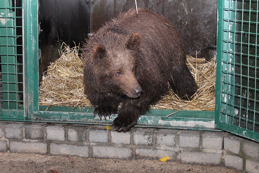 Jonge beer opgevangen...