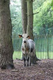 Jonge zeboestier in tuin...