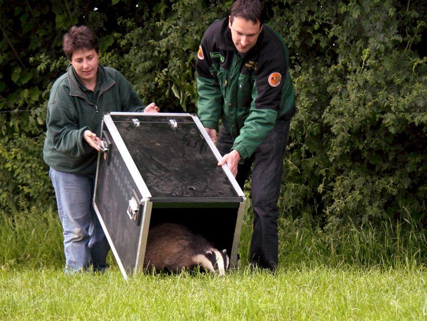 Natuurhulpcentrum vangt ruim 5.000 dieren op in 2007...
