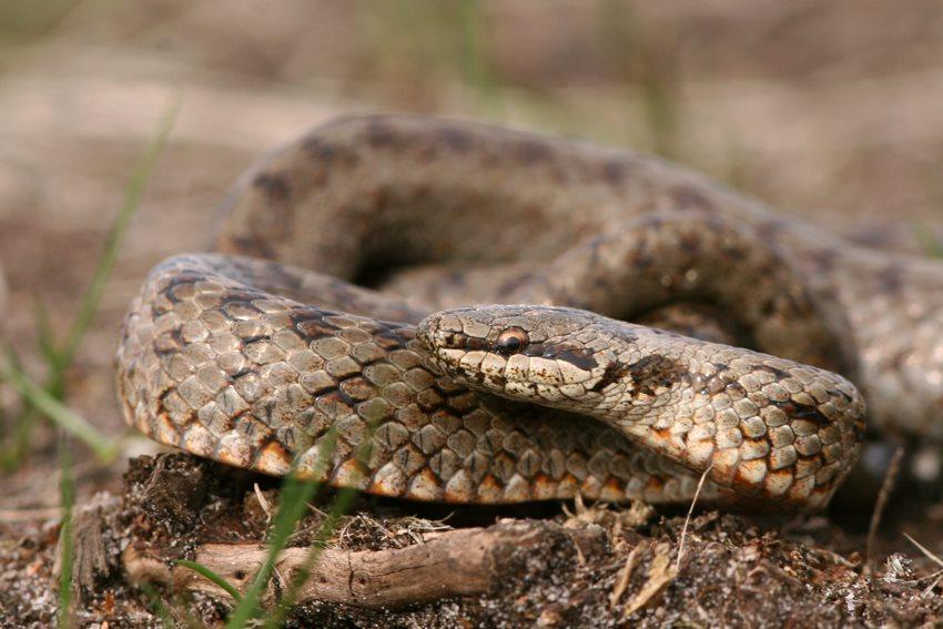 Help, een slang in de tuin...