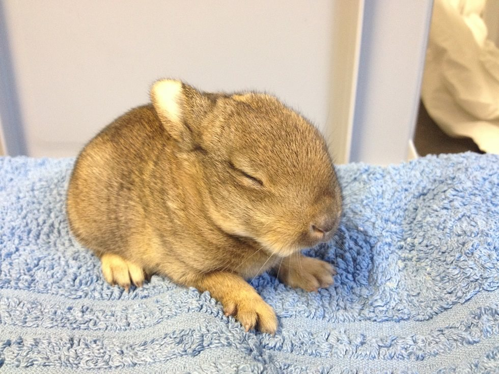 Eerste jong konijntje!