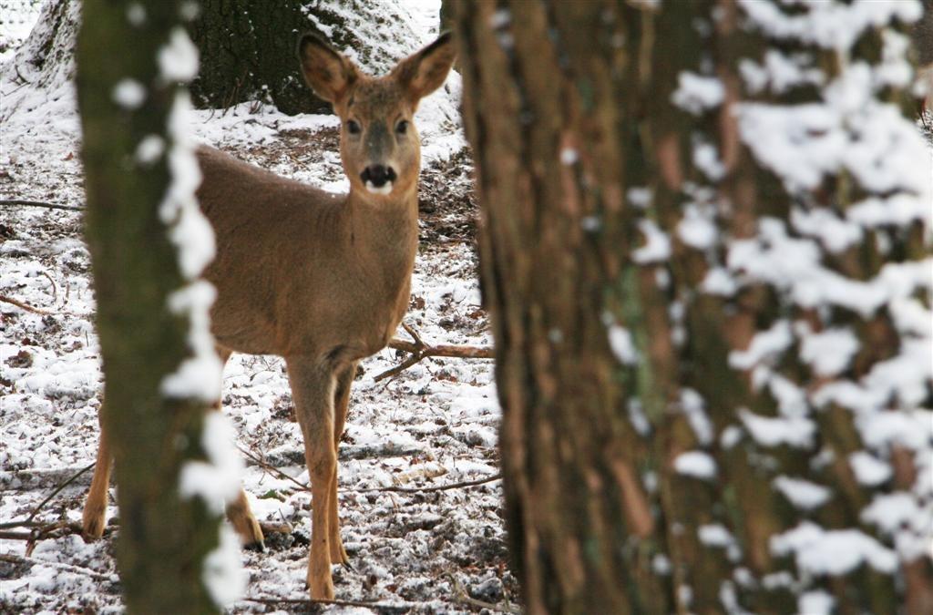 Eekhoorn bevrijd uit boom...