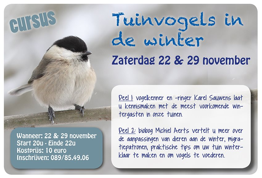 Cursus tuinvogels in de winter